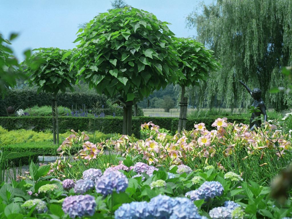 bloemen en planten in bloei
